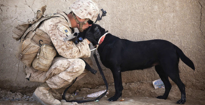 best service dog breeds for PTSD