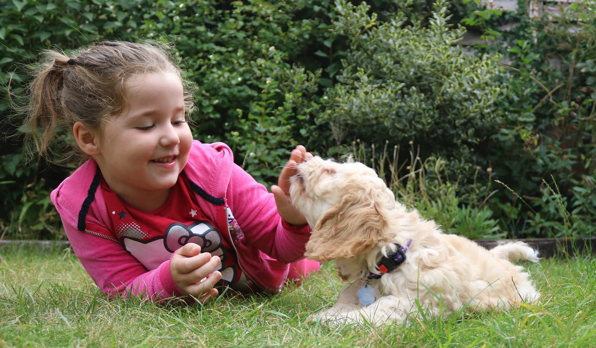 service dog breeds for autism