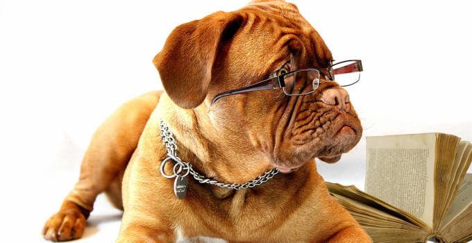 service dog training school